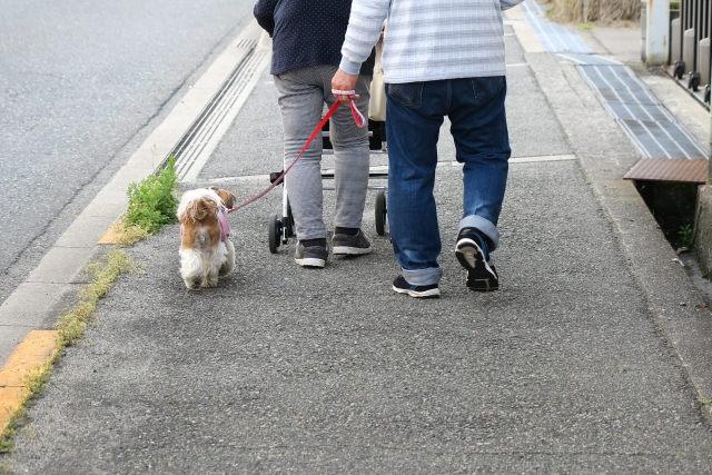愛犬だけでなく、飼い主様も高齢化している