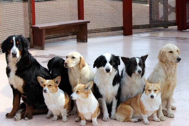 愛犬を社交的な犬にするためには